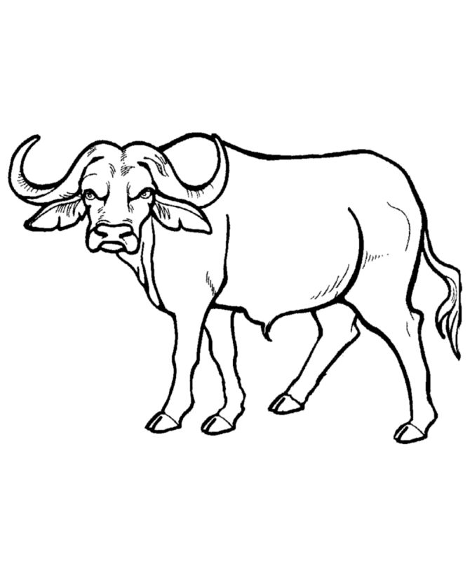 African cape royalty free. Buffalo clipart cute