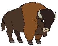 . Buffalo clipart cute