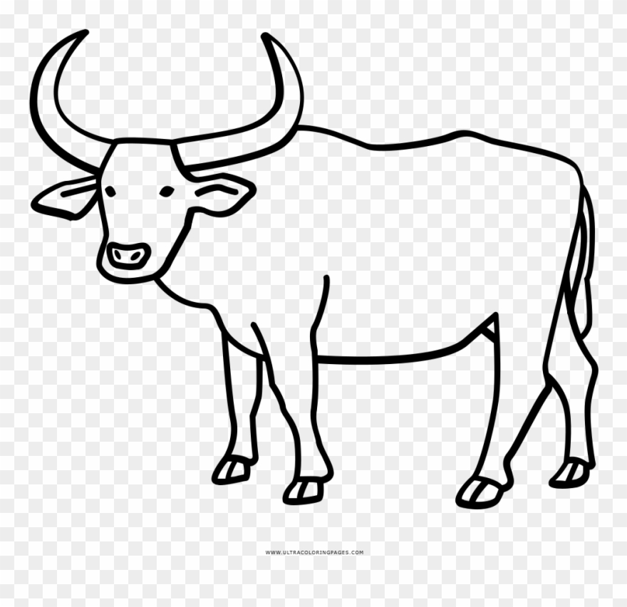 Coloring page with water. Buffalo clipart drawing