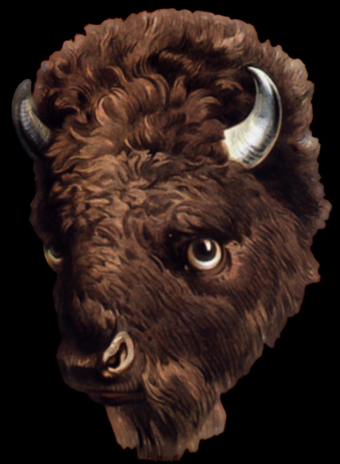Paintings clip dans board. Buffalo clipart head