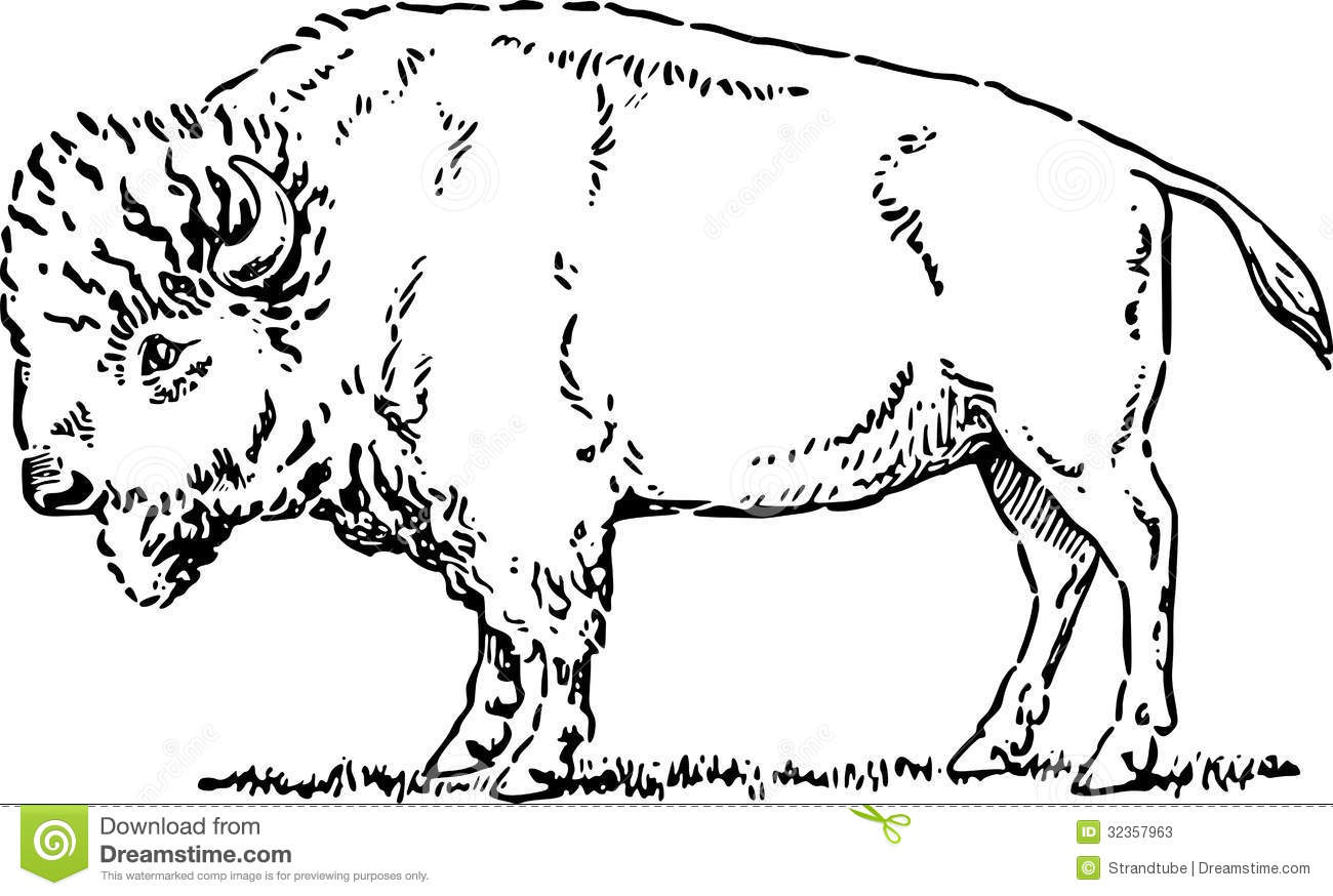 Buffalo clipart line. White