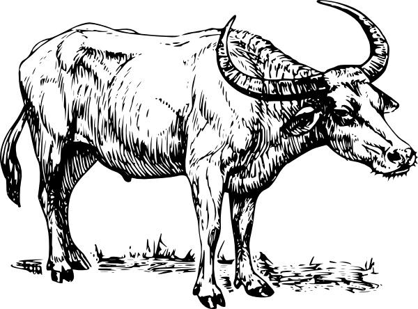 Clip art free vector. Buffalo clipart line