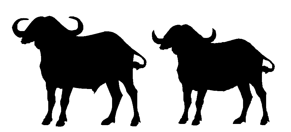 Buffalo clipart simple. Free cliparts download clip