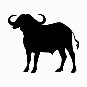 Buffalo clipart transparent. Png images free download