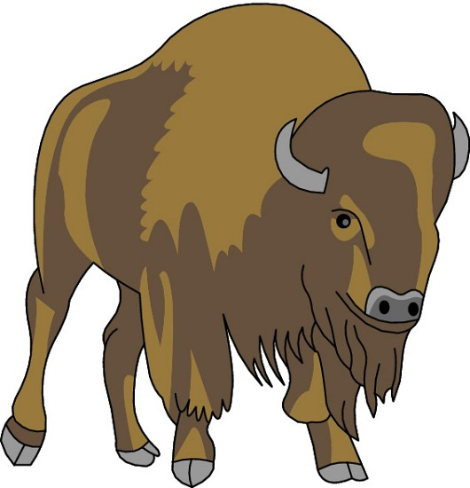Animal e classroom. Yak clipart female buffalo