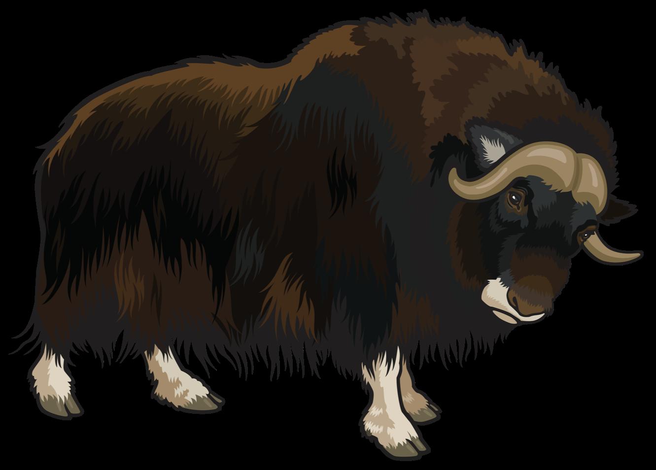 Domestic yak clip art. Buffalo clipart transparent