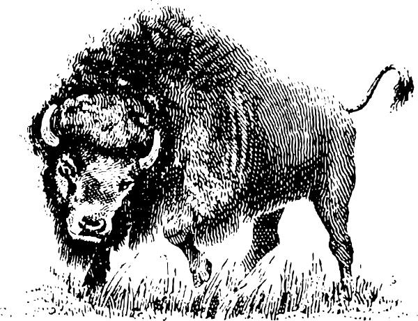 Clip art free in. Buffalo clipart vector