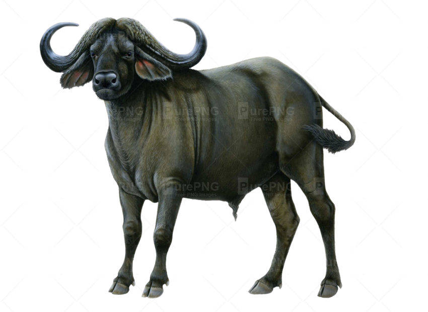 Png image purepng free. Buffalo clipart wildebeest