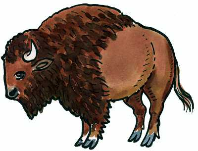 Flashcards mha language project. Buffalo clipart yak
