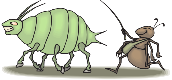 Bugs clipart aphid. Ant hearding an clip