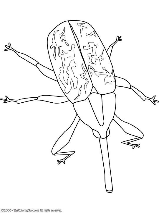 Rodent embroidery patterns pinterest. Bugs clipart boll weevil