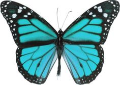 How to draw butterflies. Bugs clipart butterfly