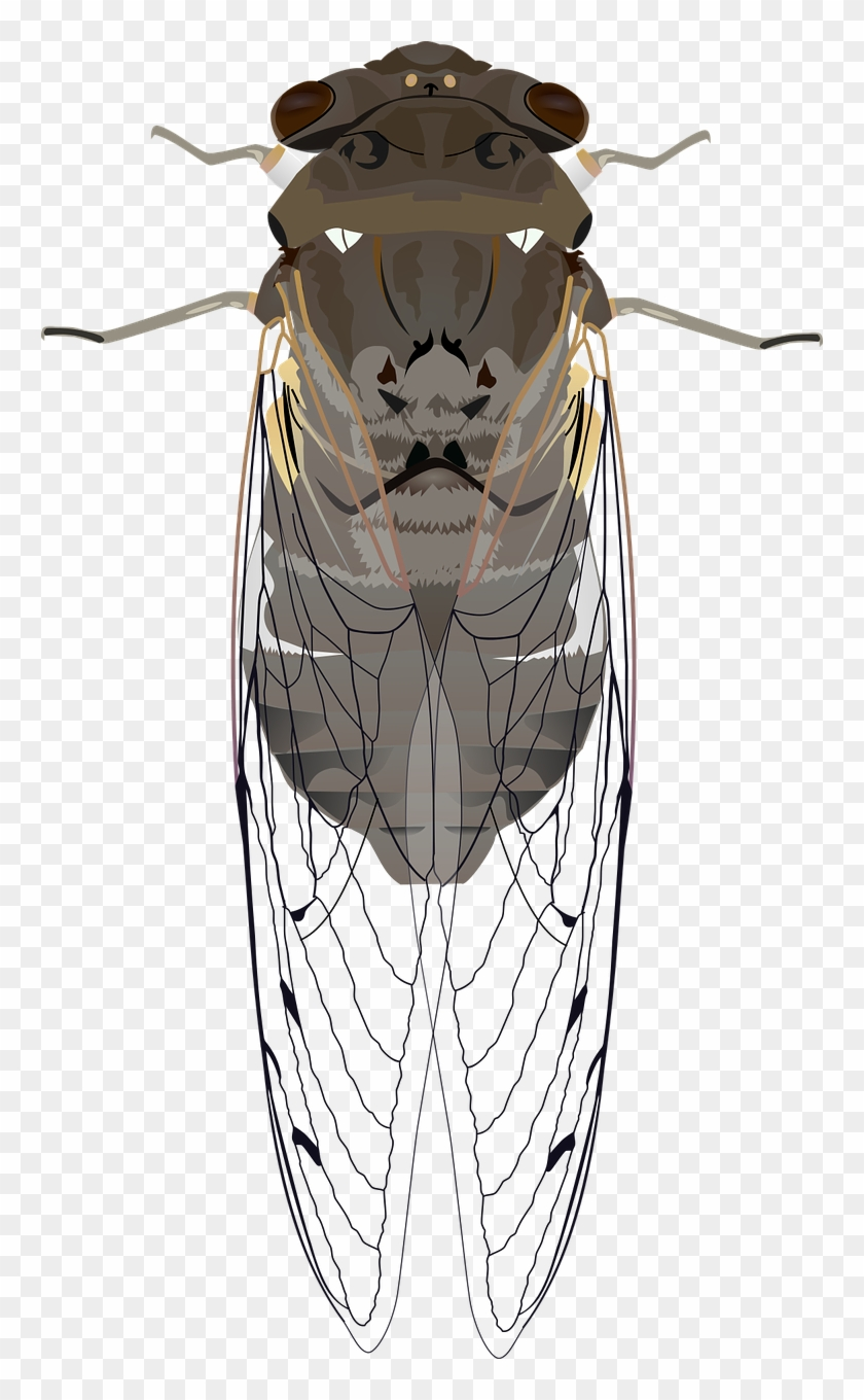 Animals insect wings png. Bug clipart cicada