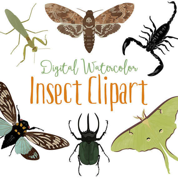 Insects watercolor summer woodland. Bug clipart cicada