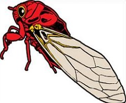 Bug clipart cicada. Free insect