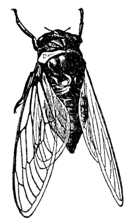 Bug clipart cicada. The crying hills bees