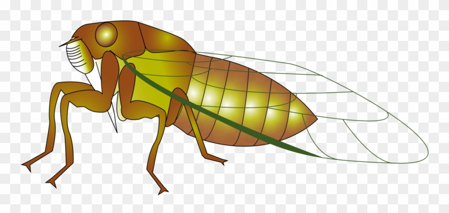 Bug clipart cicada. Insect the cicadidae true