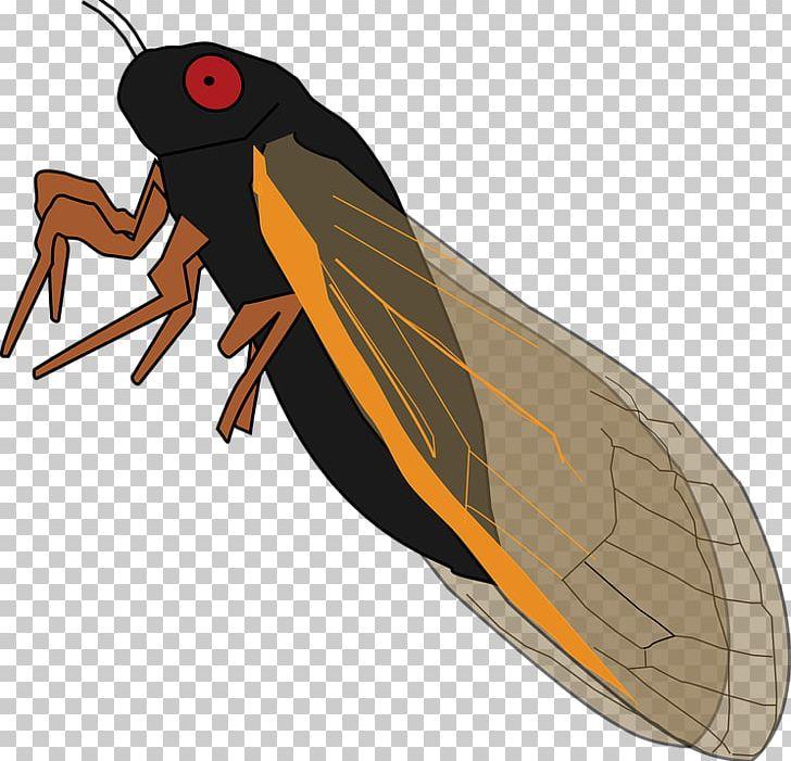 Insect periodical cicadas true. Bug clipart cicada