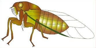 Free insect. Bug clipart cicada