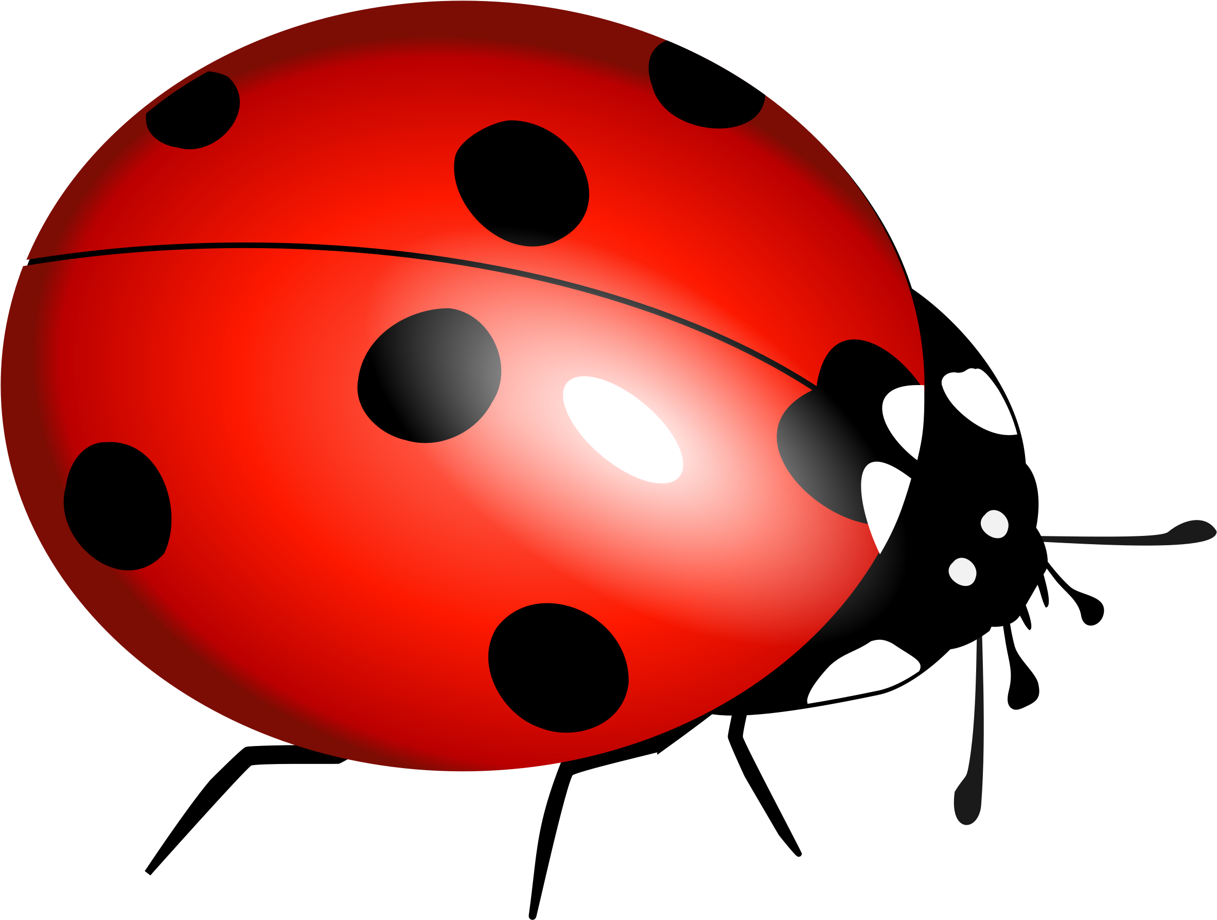 Bug clipart clear background. True transparent lady full