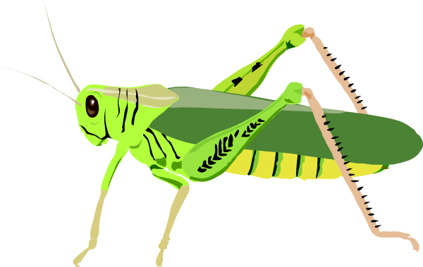 Bug clipart clear background. Insect png images transparent