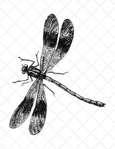 Bug clipart dragonfly.  best images dragon