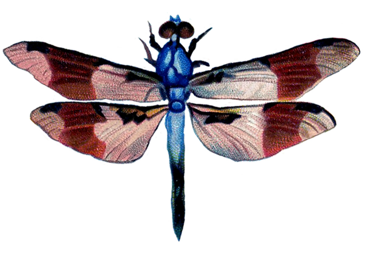 Bug clipart dragonfly. Vintage clip art colorful