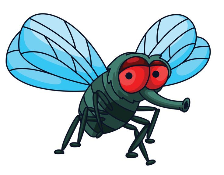 Bug clipart fly.  best petites b