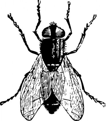 Bug clip art vector. Insect clipart fly