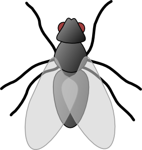 Insect clip art at. Bug clipart fly