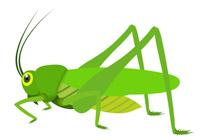 Free insect clip art. Bugs clipart grass hopper