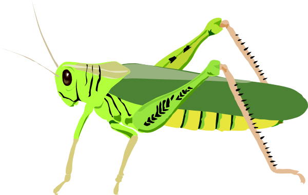 Free grasshoppers cliparts download. Cricket clipart insect