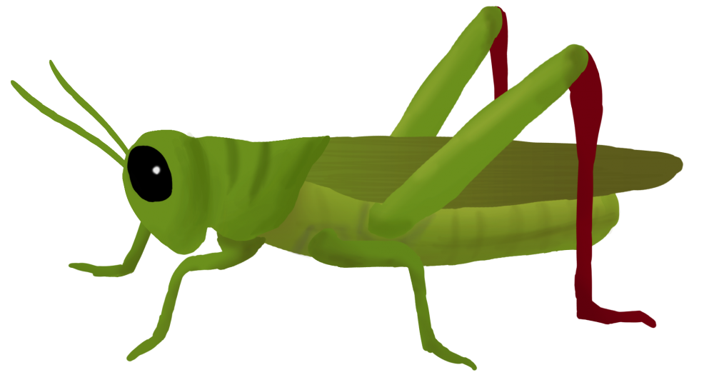 Grasshoppers cliparts free download. Bugs clipart grass hopper