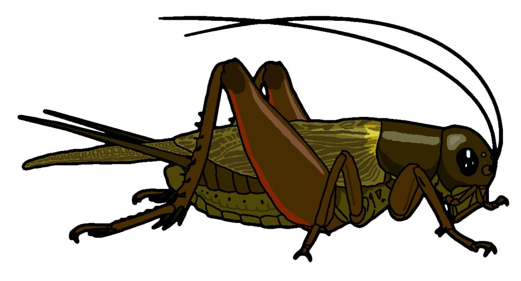 Bug clipart grass hopper. Field cricket by misterbug