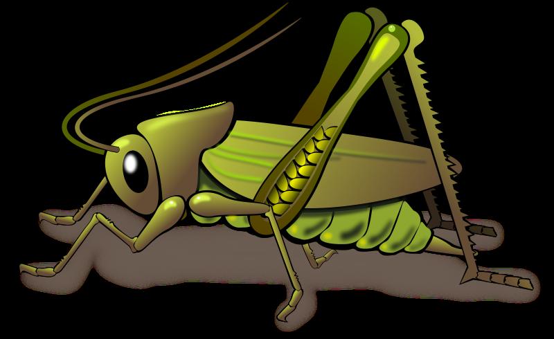 Insect clipart cute vector. Grasshopper clipartix