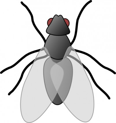 Fly bug clip art. Insect clipart