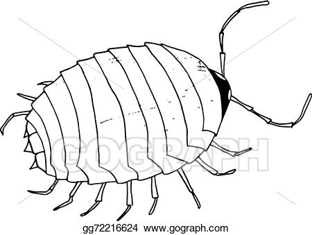 Bug clipart mite. Vector art beetle drawing