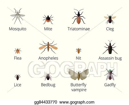Vector stock insect parasites. Bug clipart mite