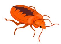 Free insect clip art. Bug clipart popular