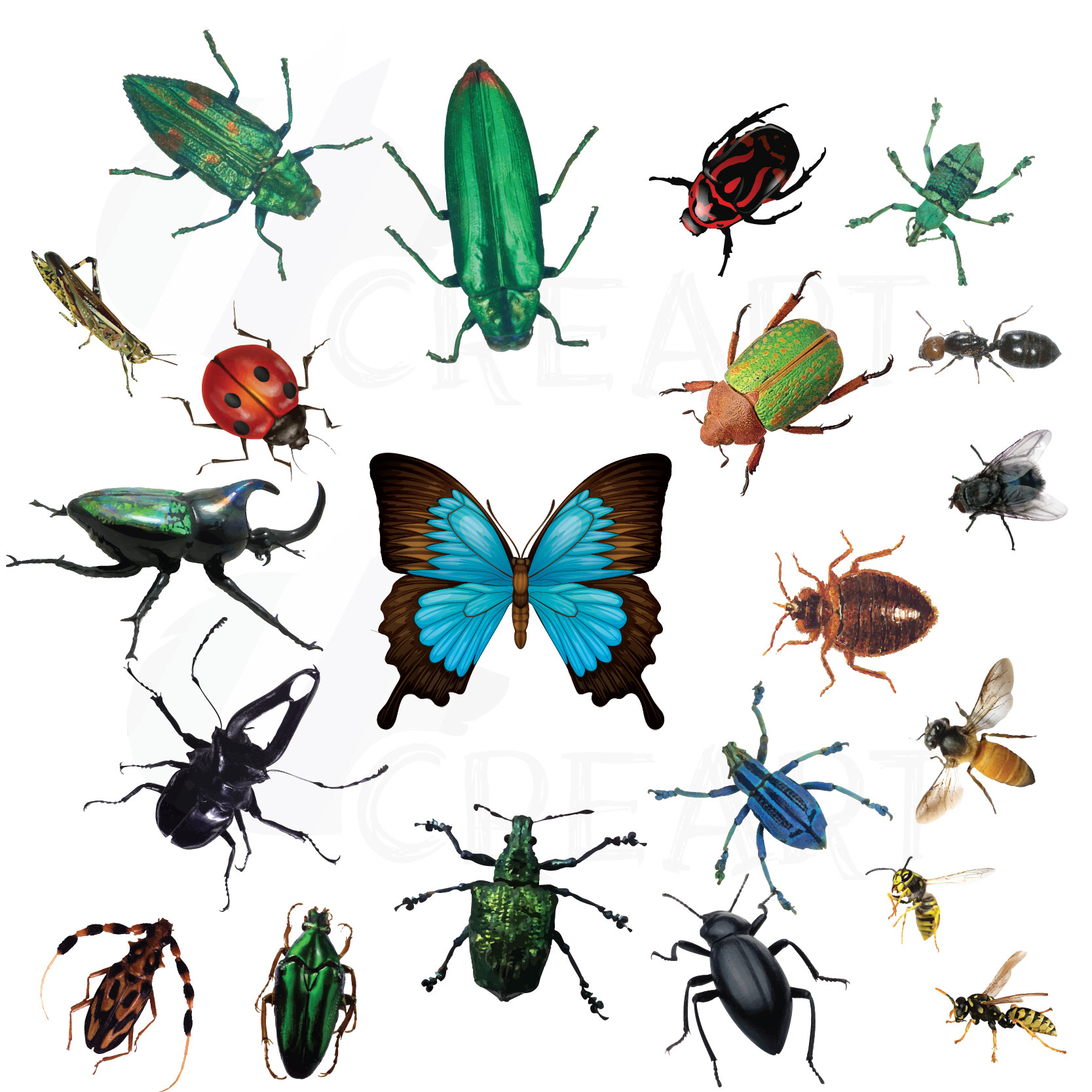 Bugs clipart. Watercolor insects and pac