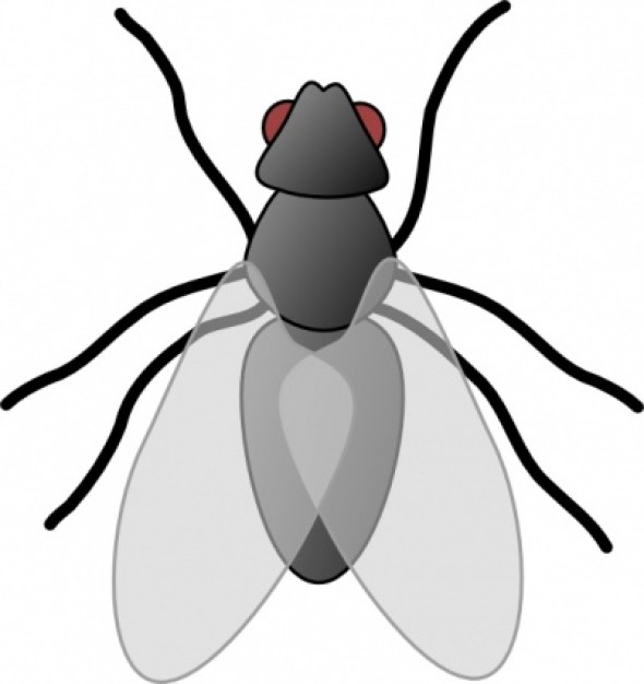 Fly with red eyes. Bug clipart popular
