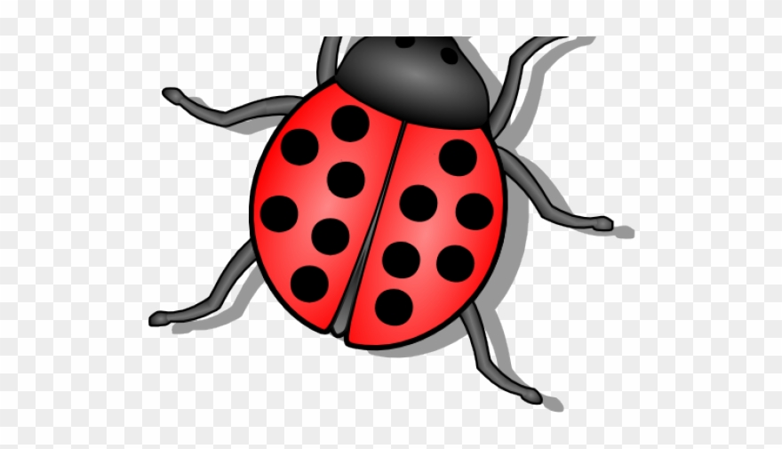 Ladybugs clipart little bug. Flies small lady png