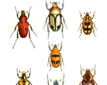 Bug clipart summer. Insect clip art etsy