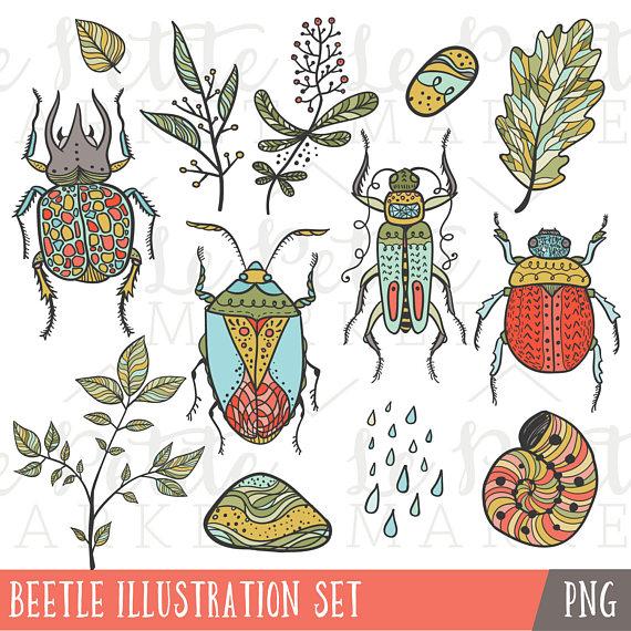 Bug clipart summer. Beetle illustrations set clip