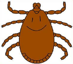collection of free. Bug clipart tick