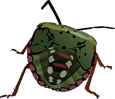 Bug clipart tick. Like animals bugs assorted