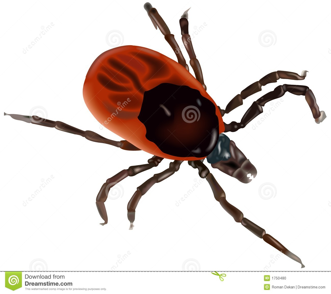 Bug clipart tick. Insect