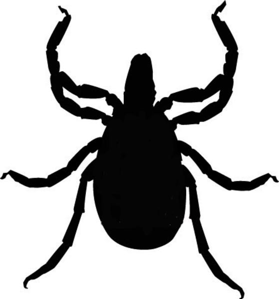 . Bug clipart tick