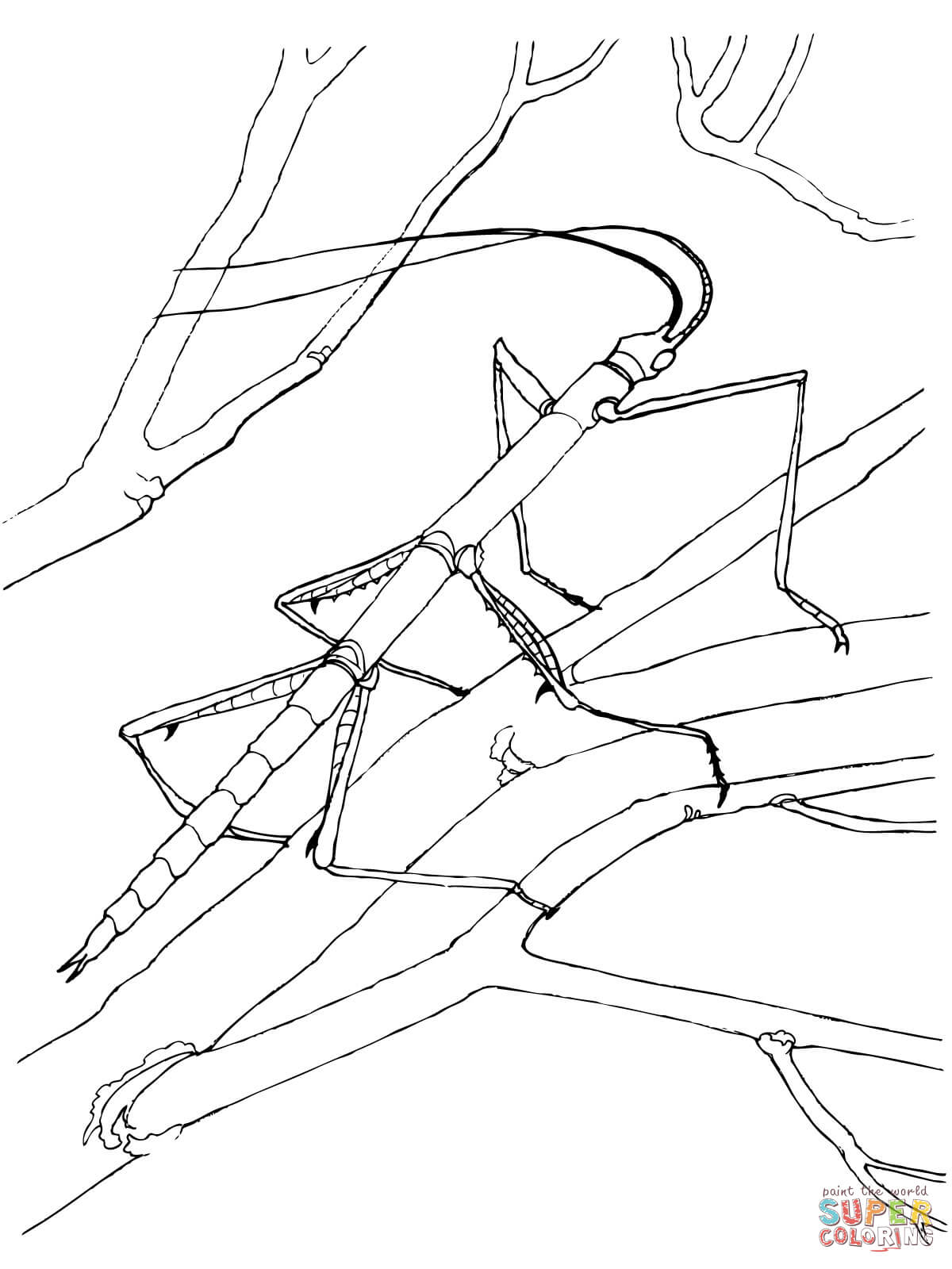 Bug clipart walking stick. Coloring page free printable