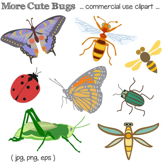 Bug clip art insect. Bugs clipart